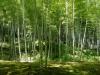 Bambusový les -  incentivní zájezd OMT group
