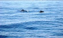 Pozorování delfínů
