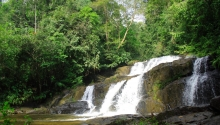 Deštný prales Singharaja