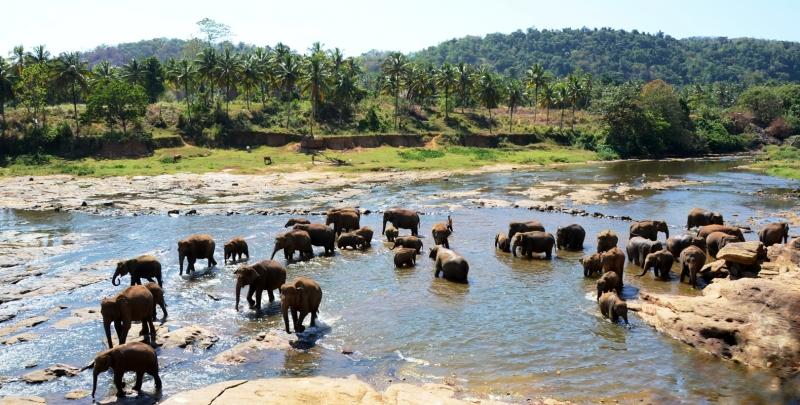 Sloní sirotčinec v Pinnawale